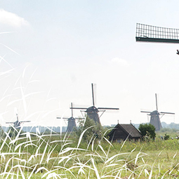 wind-mill-park-must-see-rotterdam-excursion-dutch-matters-255
