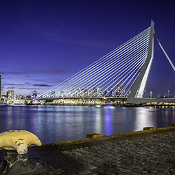Erasmusbrug From The Cruise Ship Terminal
